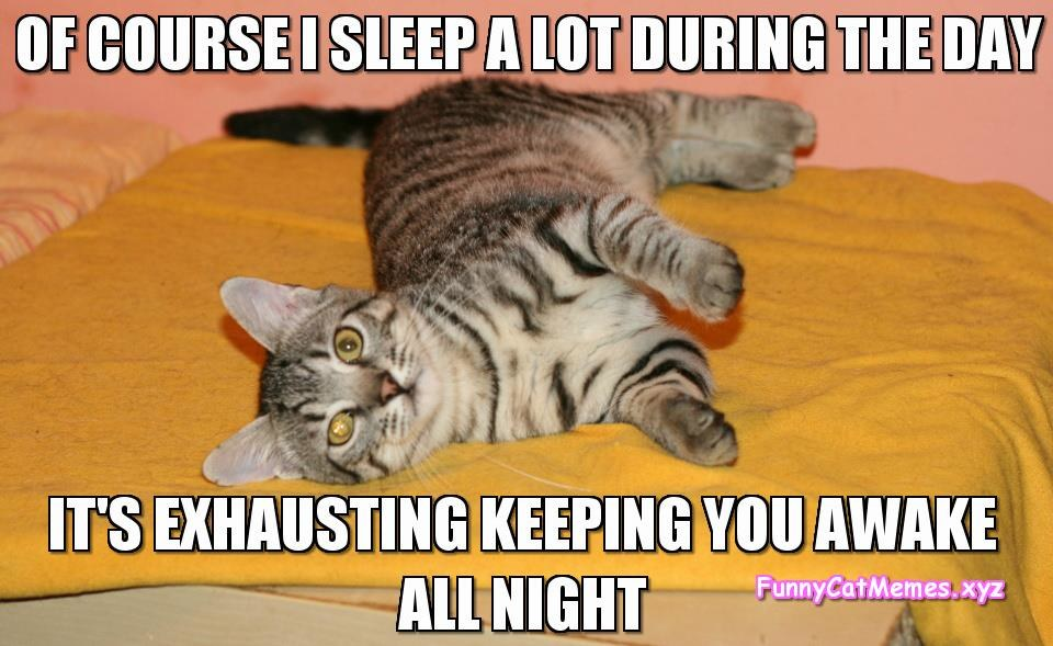 980x national cat day 2017 10 funny memes comic sands