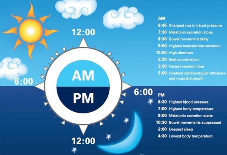 Circadian Rhythm and Your Body Clock