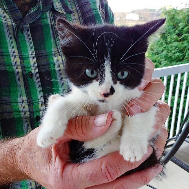 Share using Facebook ... & Stray Kitten Scratches Door to Get Help and Decides She Will Run ...