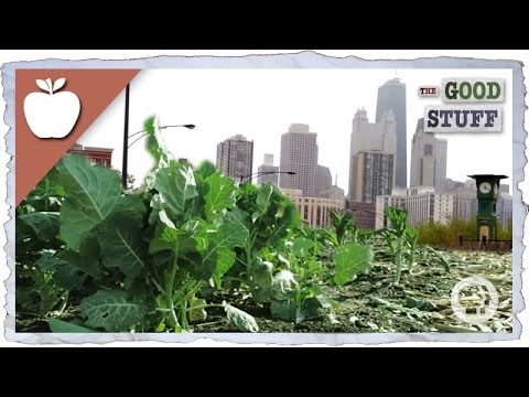 photo image Urban Farming Key in Fight Against Hunger and Climate Change