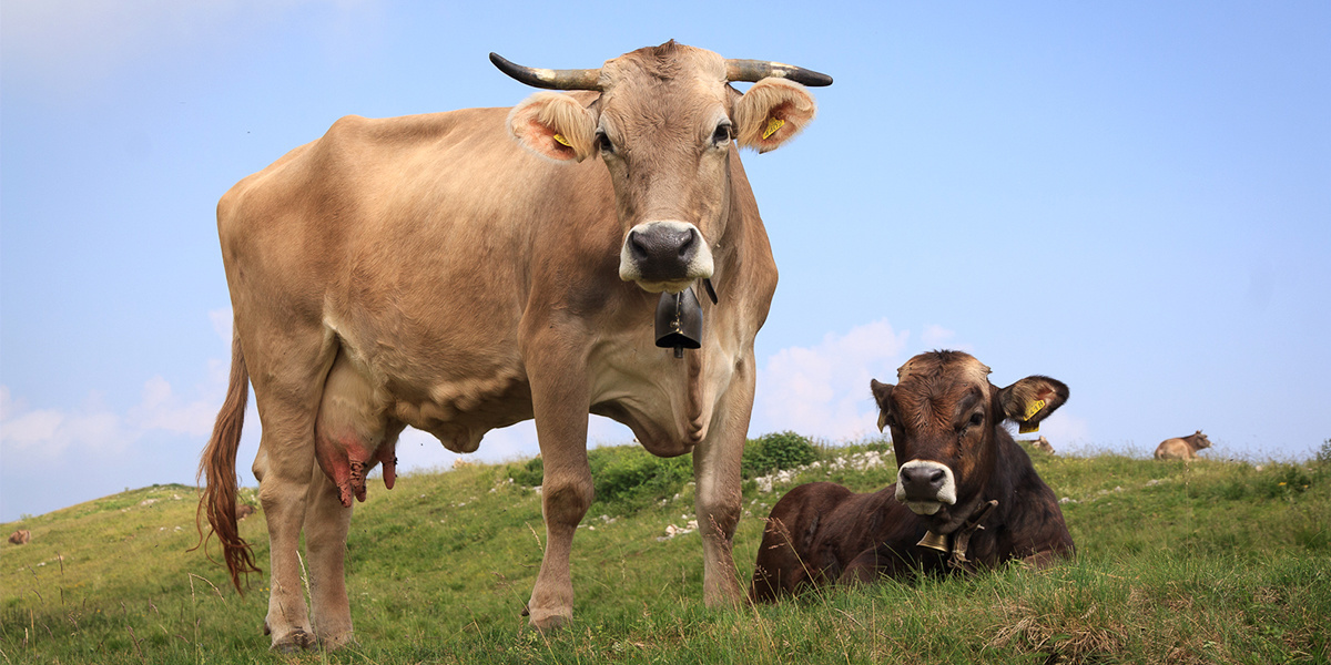 Would a Beef Tax Reduce Greenhouse Gas Emissions?
