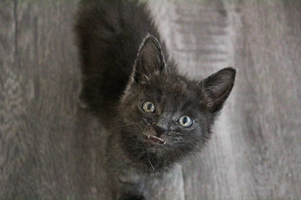 Kitten With Toothy Smile Was Brought Back From The Brink