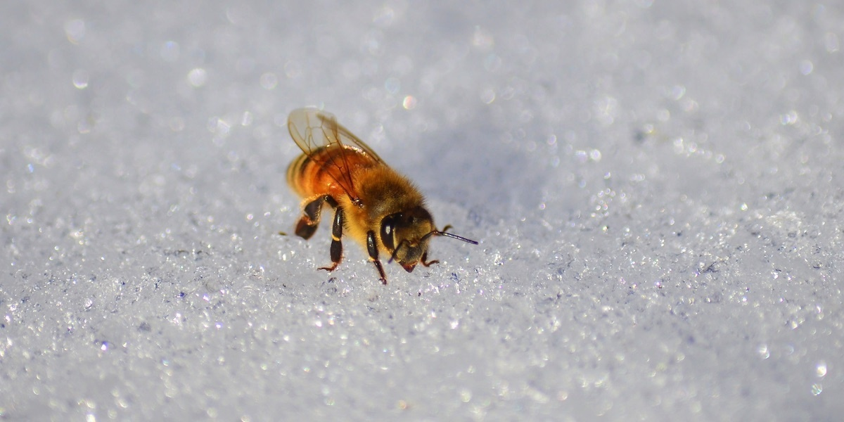 Two Boys Charged With Killing Half a Million Honeybees in Iowa