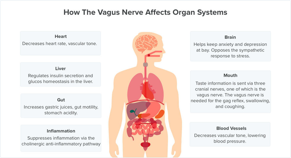 11 Symptoms Of Vagus Nerve Dysfunction