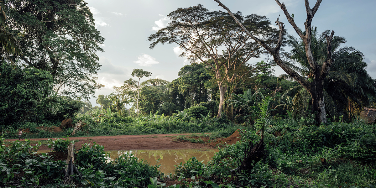 Climate Change and Deforestation Threaten World's Largest Tropical Peatland