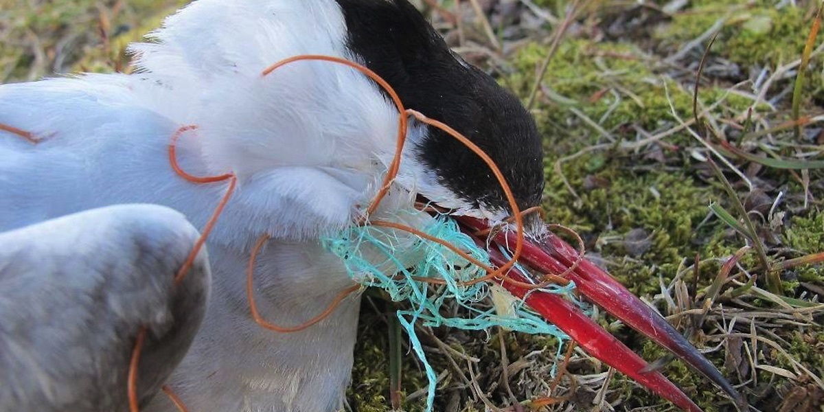 Plastic in All Sizes Found Everywhere in Once Pristine European Arctic