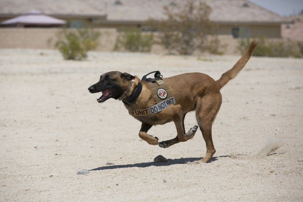 This Is What Happens To Military Working Dogs After Retirement We