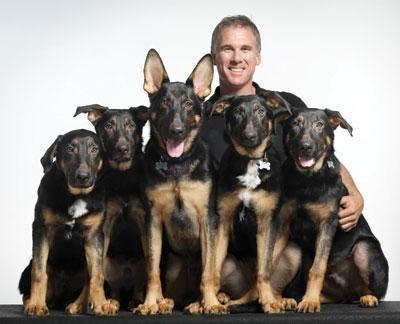 Police Dog Training For German Shepherd Pups