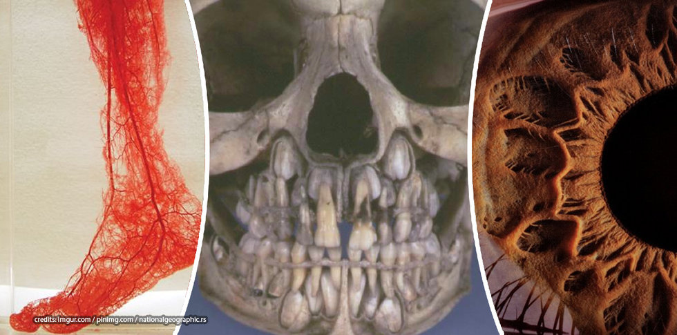 Interesting Facts About The Human Body Osmscience