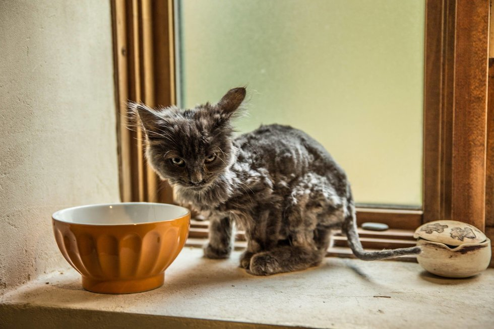 Scraggly Cat Found by the Road Comes Running When a Man Stopped for Her. Scraggly Cat Found by the Road Comes Running When a Man Stopped for Her. 980x