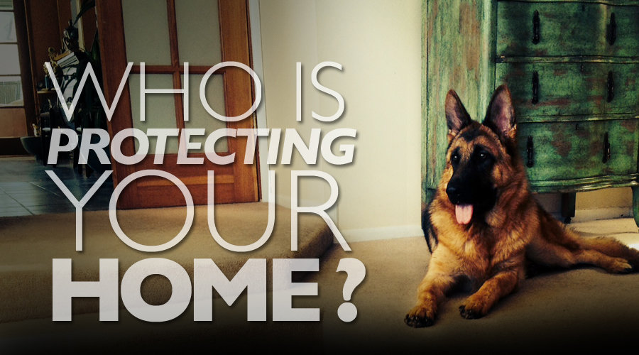 No Matter What The Situation Is, You Can Always Count On A German Shepherd  Being There To Protect You.