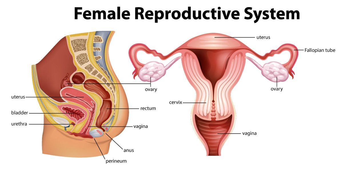 Uterus early pregnancy and tilted When Will