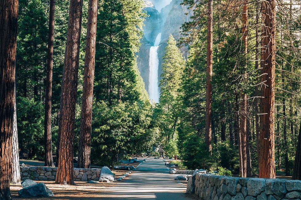 Lower Yosemite Falls framed by Pine Trees