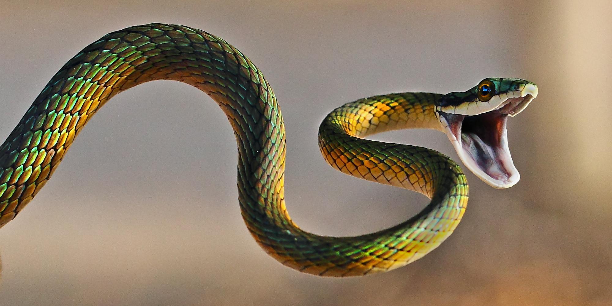 Snakes in Alabama