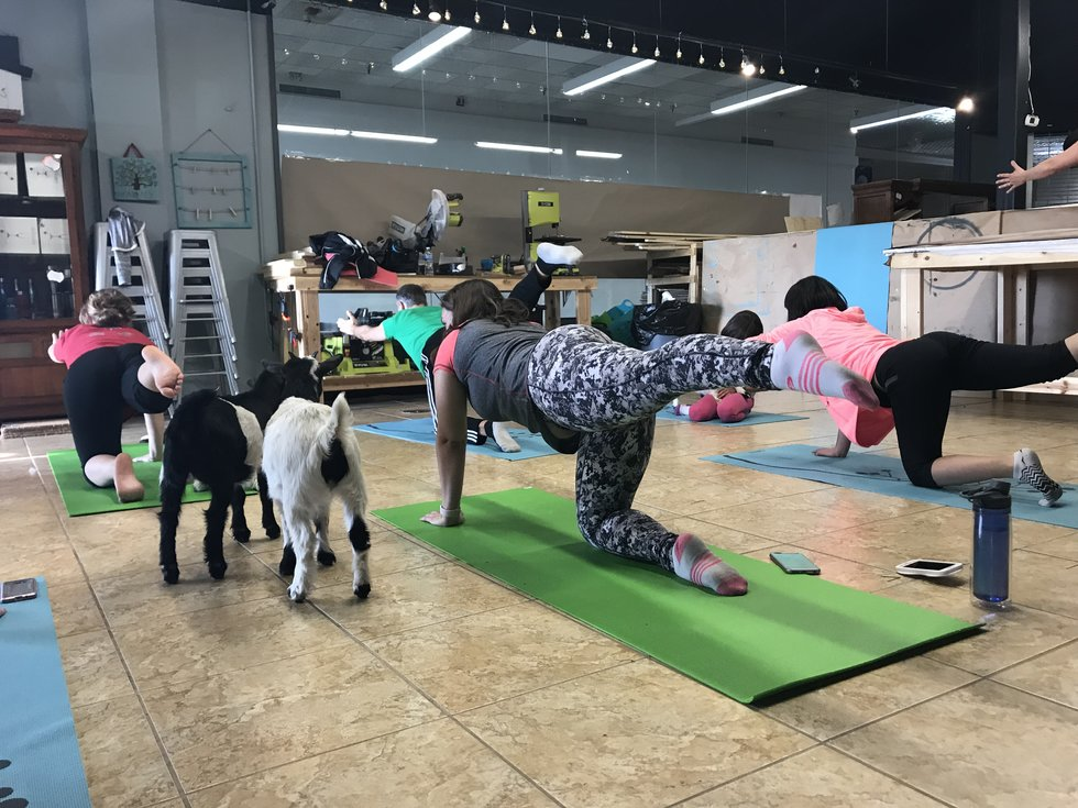11 Goat Goat Puns To Caption Your Goat Yoga Instagram Post With
