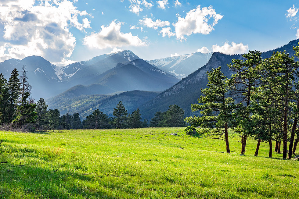 Meadow at Rocky Mountain National Park