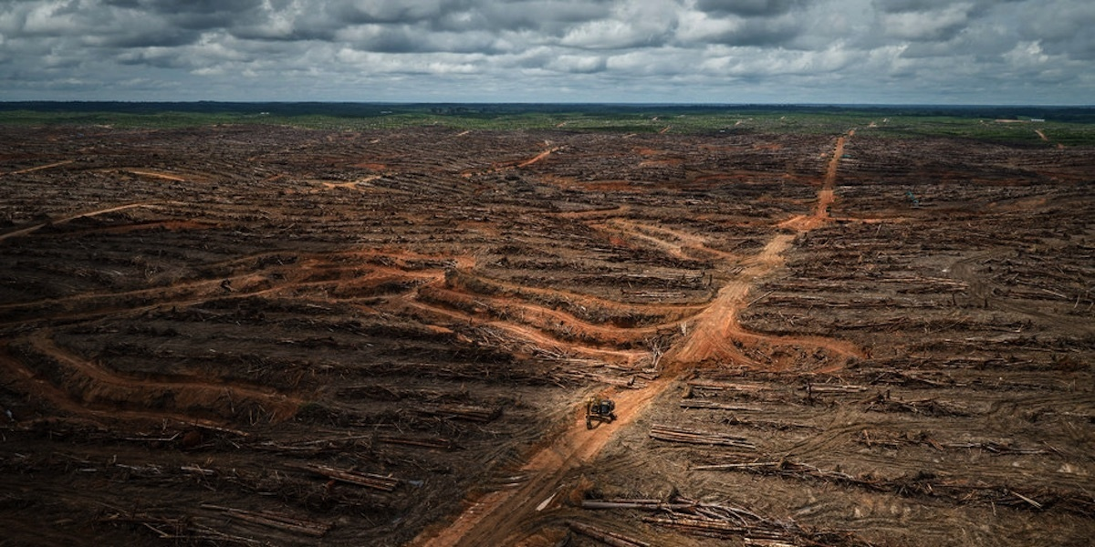 photo image WHO's Push to Ban Trans Fats Could Pave Way for Palm Oil