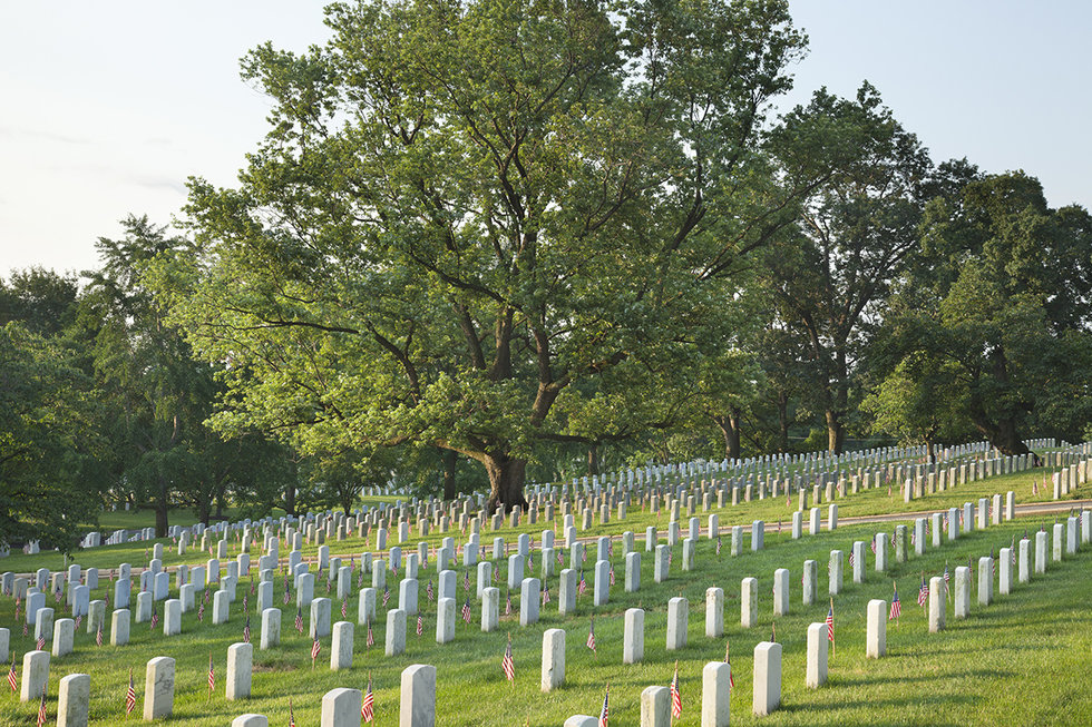 Tombstones below beautiful tree in Arlington National Cemetery