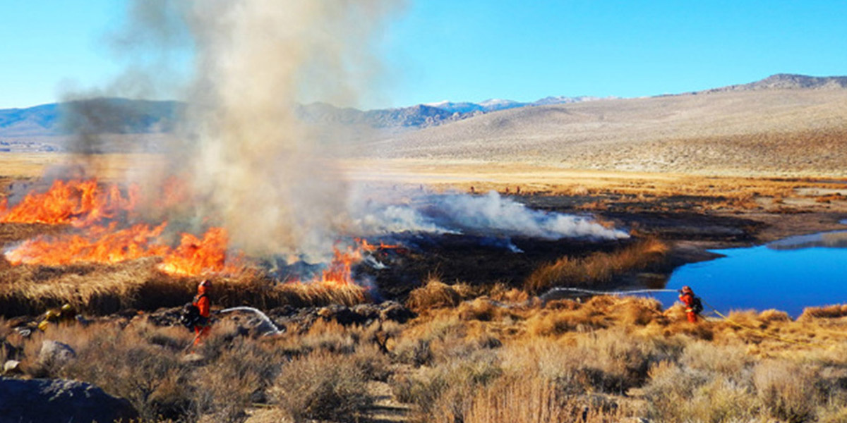 photo image Fires Restore Wetlands for Desert Fish