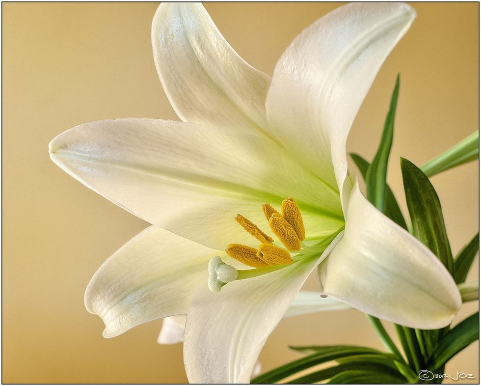 Why aren't we doing more to protect cats from Easter lilies?
