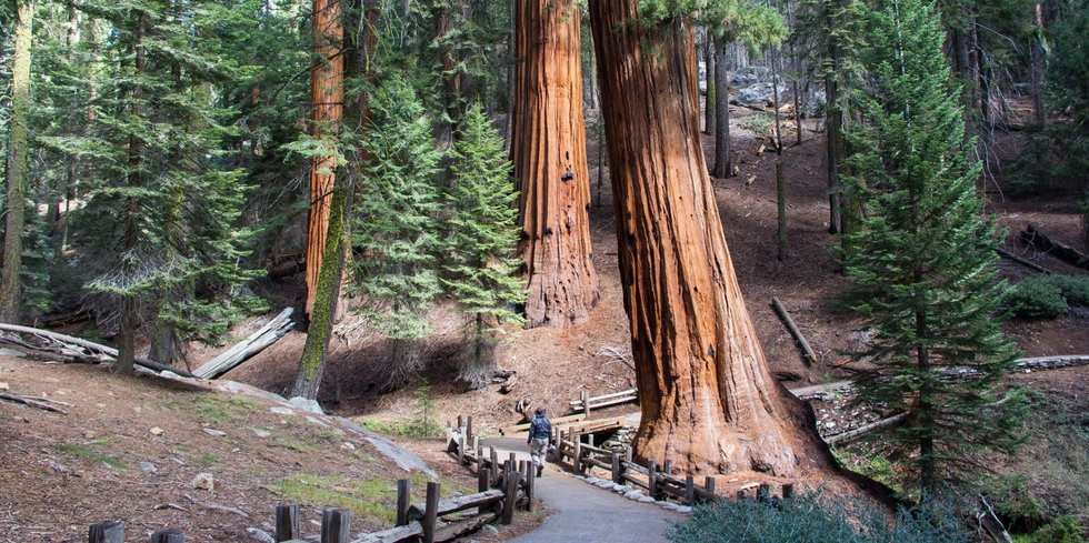 4 Days in Sequoia and Kings Canyon National Parks