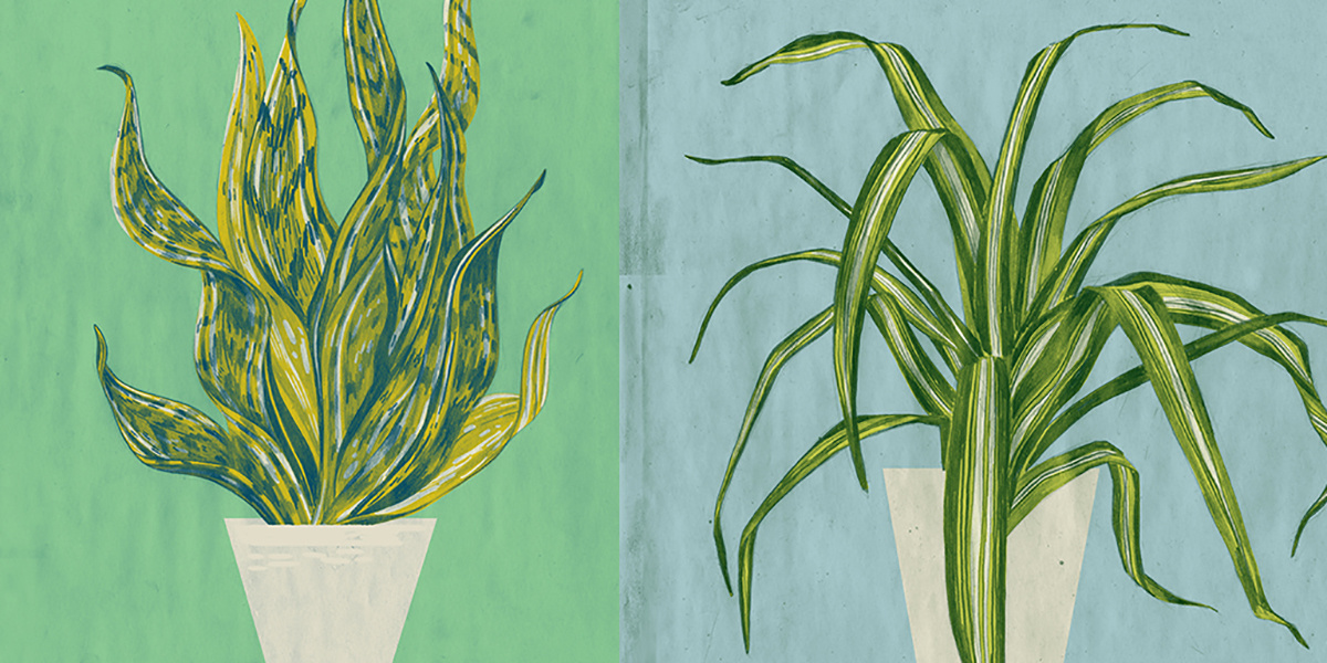 photo image The 5 Best Houseplants to Purify the Air In Your Home