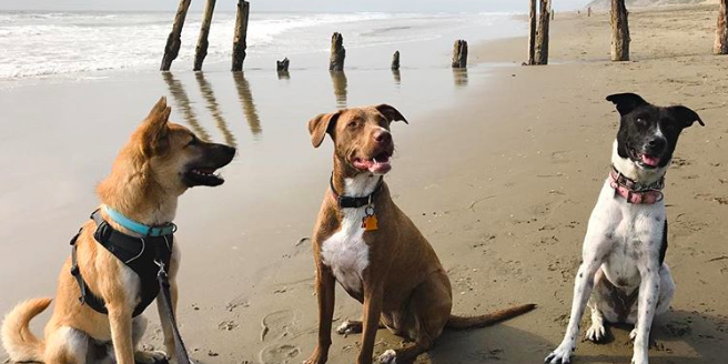 Dog-Friendly San Francisco: The Best Beaches, Parks, Restaurants, Events + More