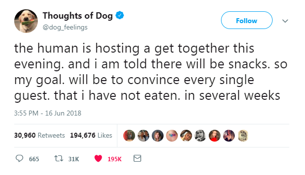 dog thoughts twitter