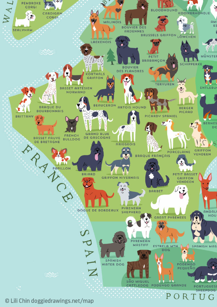 Over 40 Of All Officially Registered Dog Breeds Originate In