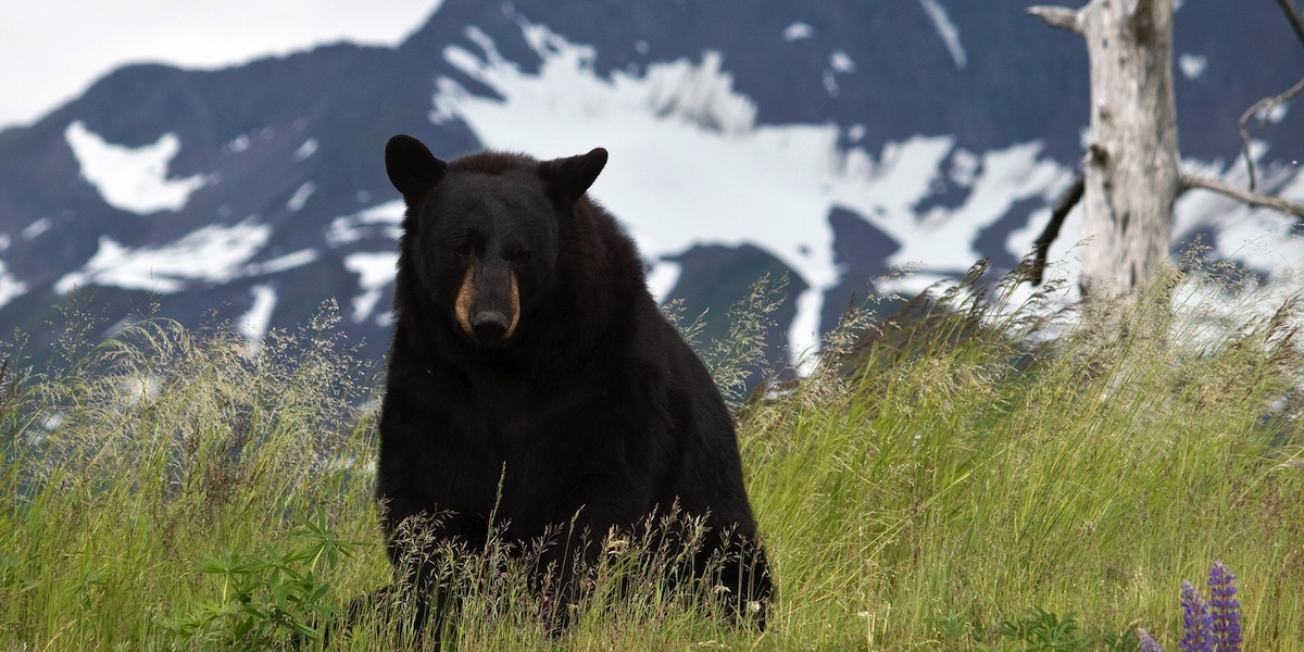 photo image Father and Son Charged With Killing Mother Bear and 'Shrieking' Cubs in Den