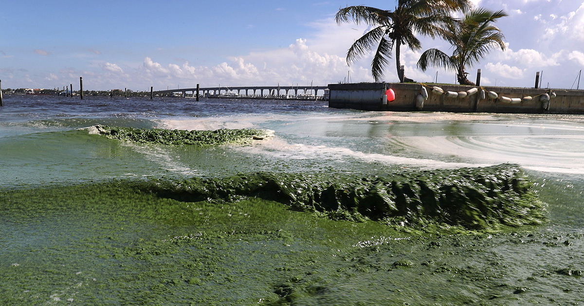 photo image What Is Causing Florida's Algae Crisis? 5 Questions Answered