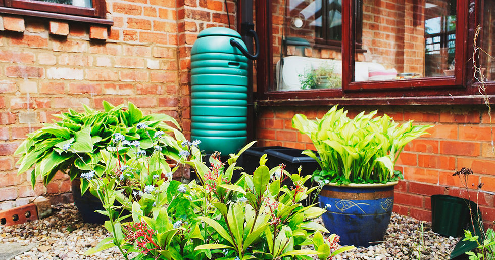 Roof-to-Garden: How to Irrigate with Rainwater