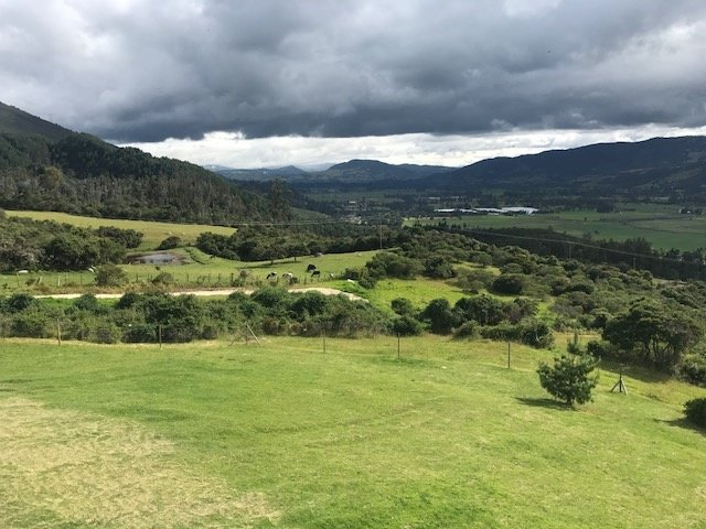 The bright green hills of Valle de Cocora