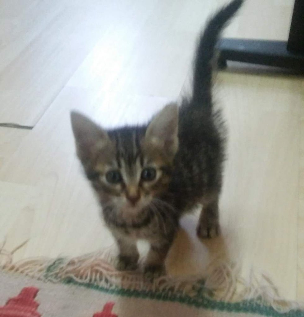 Abandoned Kitten Ran Up to Cyclist for Help - He Couldn t Leave Her ... 9b4f450bf