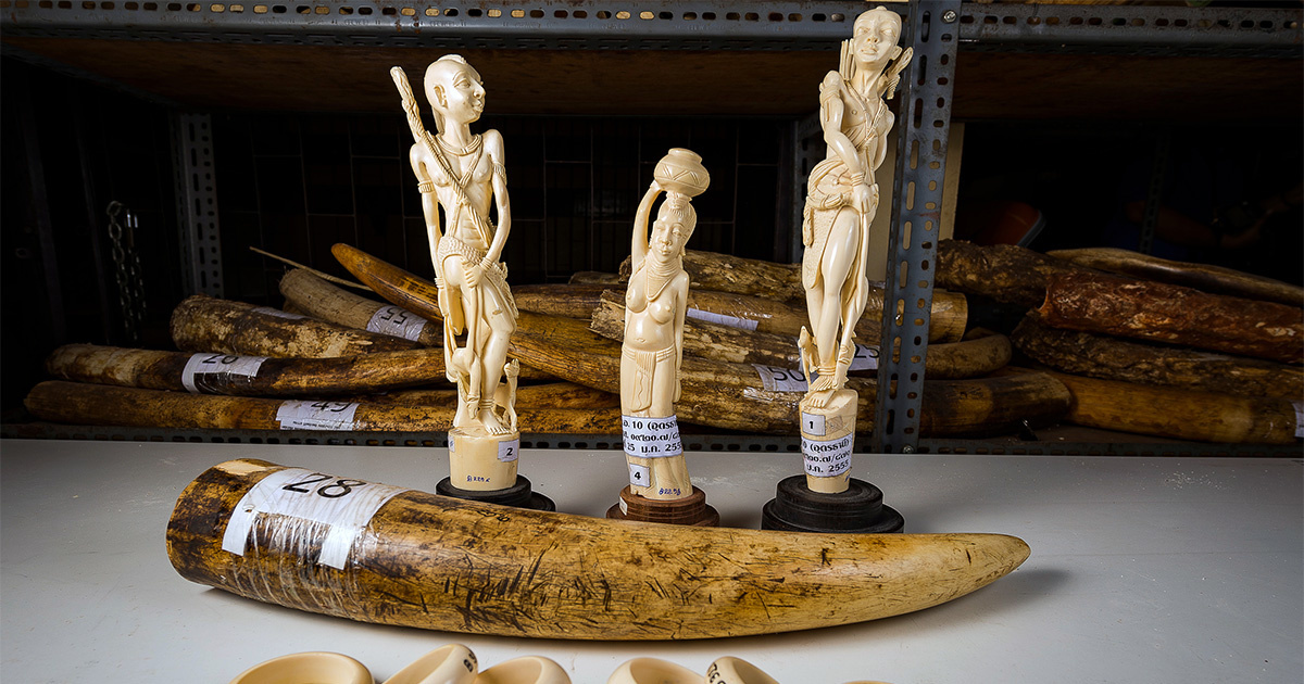 photo image Online Ivory Trade Perpetuated by Yahoo Japan, Weak Legislation
