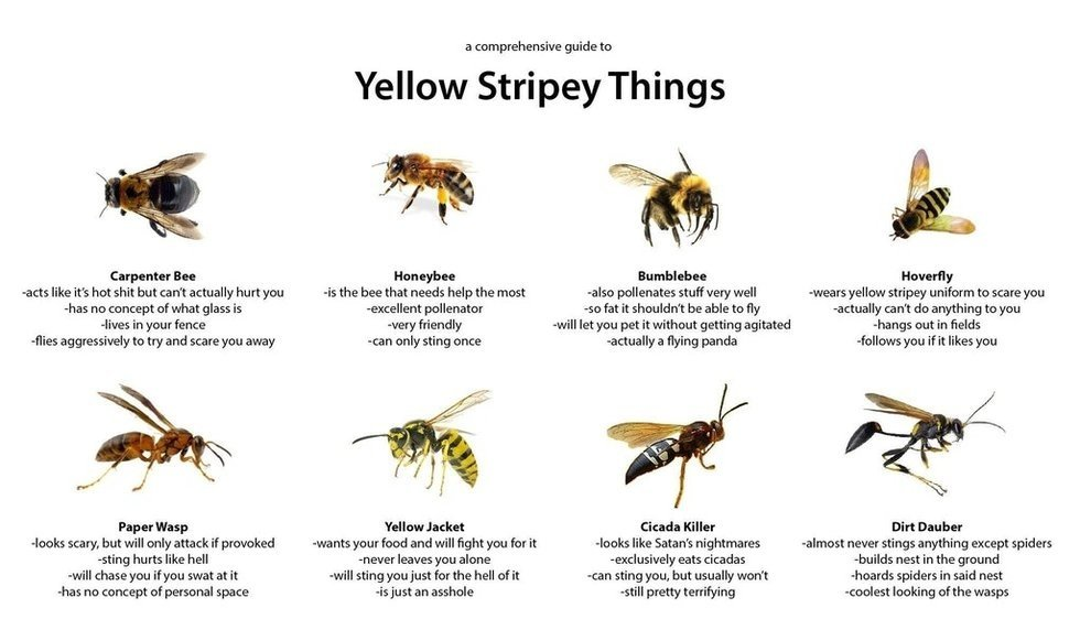 This Funny Guide To Bees And Wasps Has The Internet Buzzing George