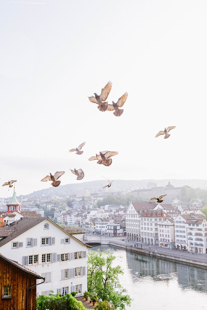 Birds flying above buildings in Zurich
