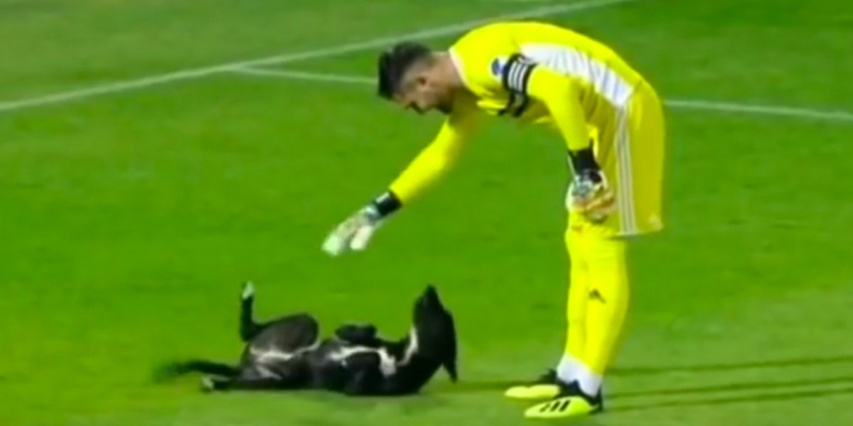Playful Pup Storms Soccer Field Looking For A Good Belly Rub In Viral Video ????