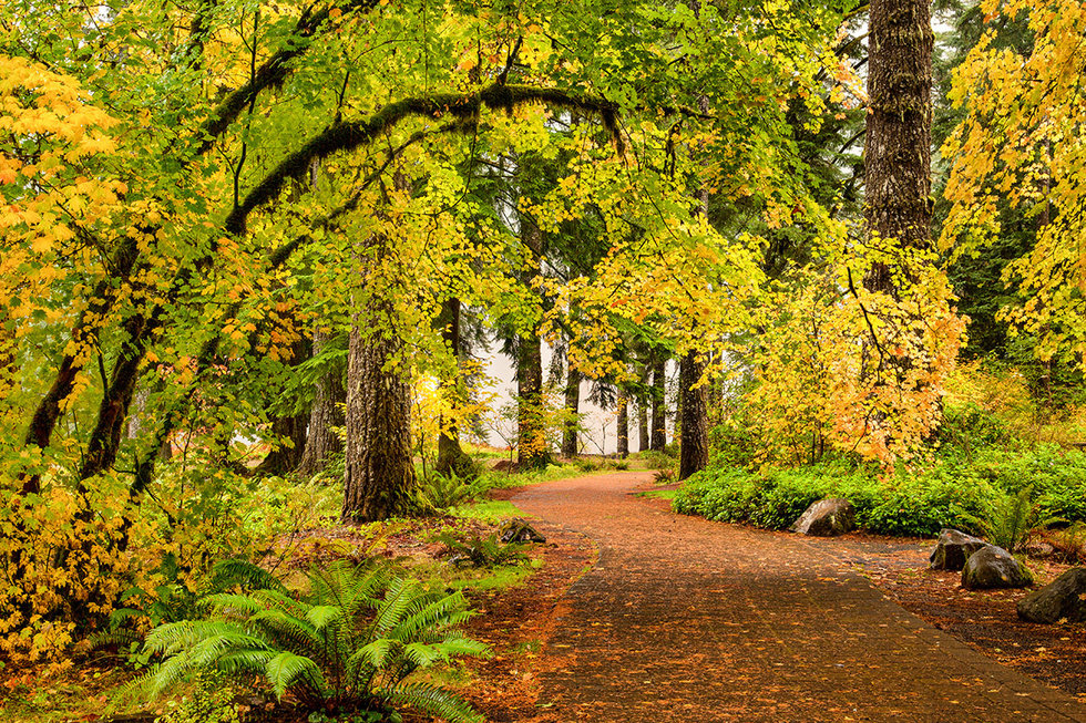 A path through autumn foliage forest in Silver Falls State Park, Oregon