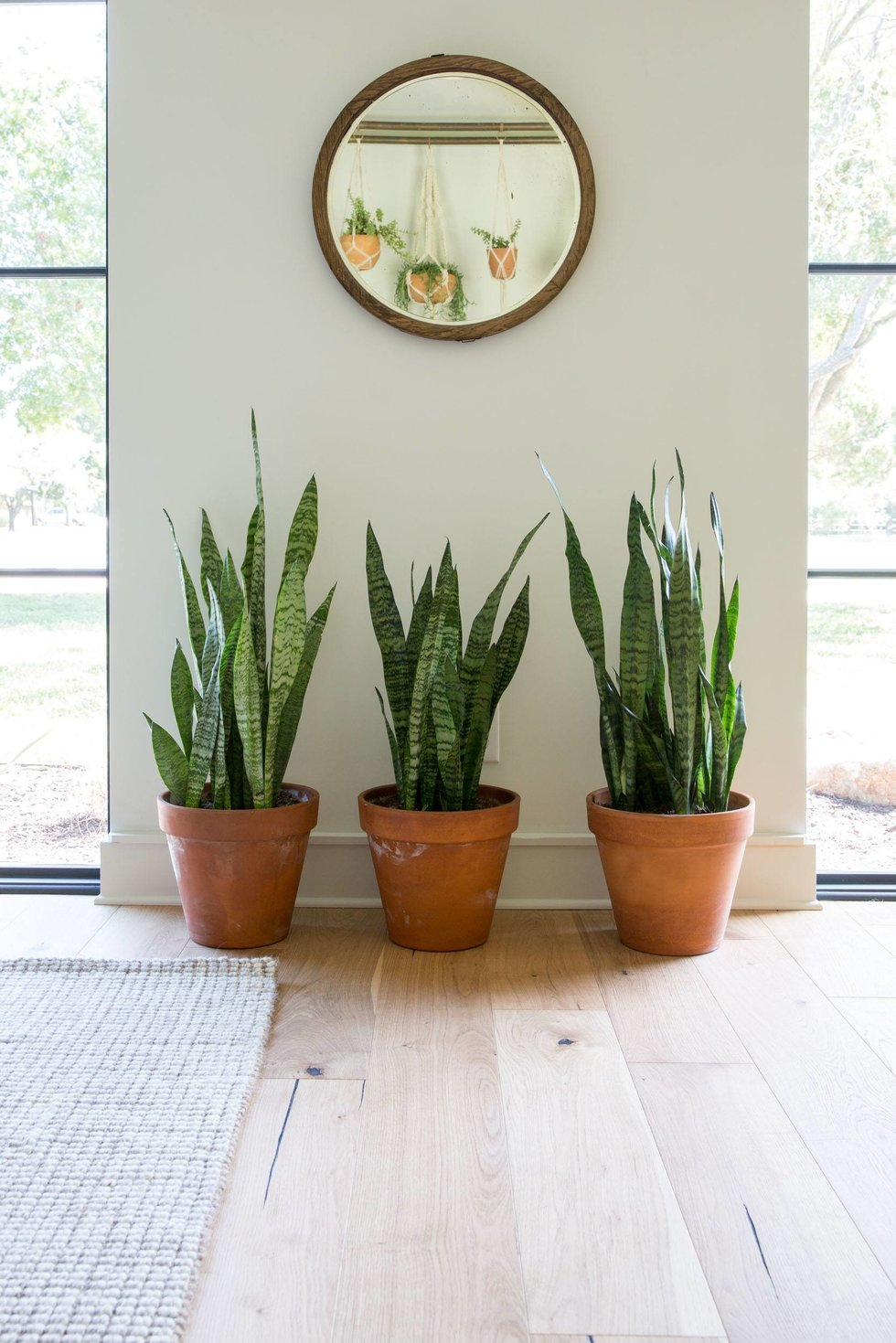 house plants with mirror