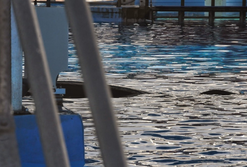 Incidents At Seaworld Parks: The Truth About 'The Truth About Blackfish