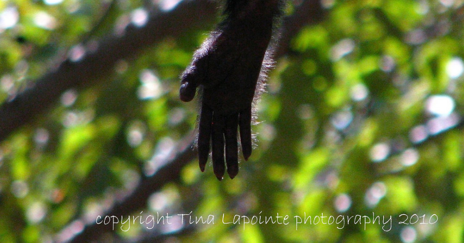 monkey paw photo