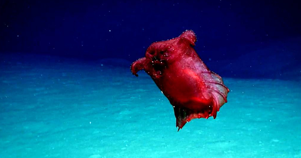 'Headless Chicken Monster' to Help Antarctic Conservation Efforts