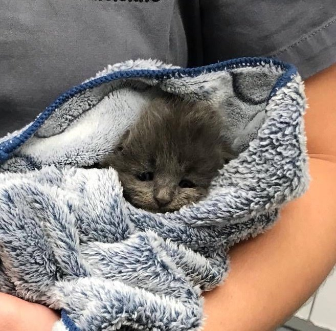 Rescuers Save Sad Kitten from Shelter and Turn Her Life Around