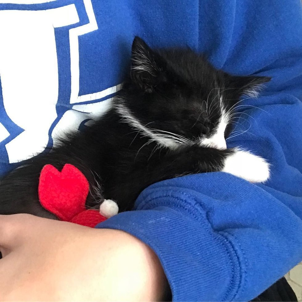 Kitten Who Showed Up In A Backyard, Comes Back To Family