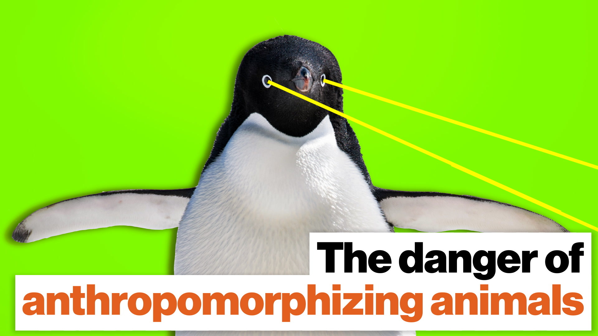 Dead penguin sex: The reason you should't anthropomorphize animals