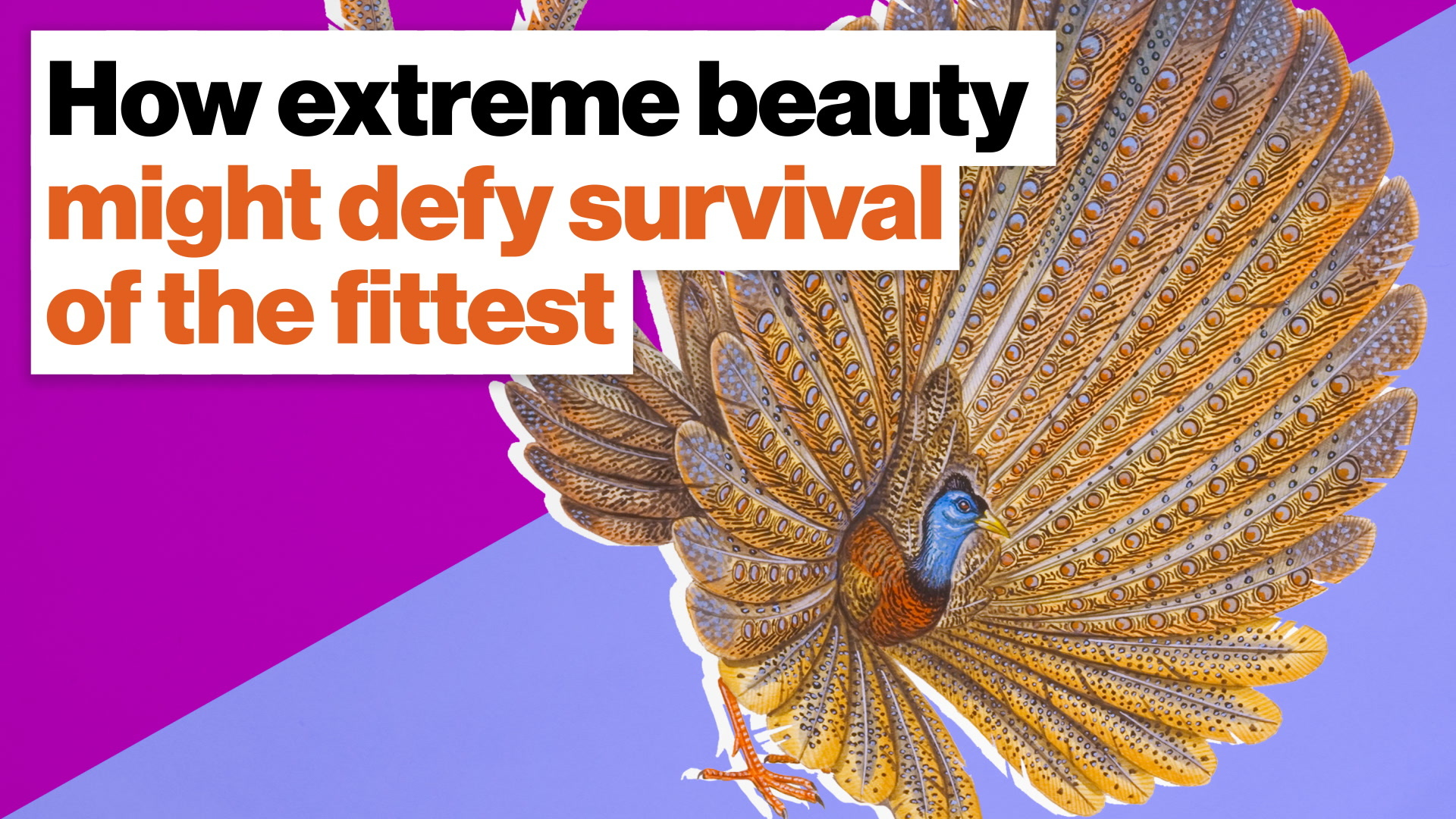 How extreme beauty might defy survival of the fittest