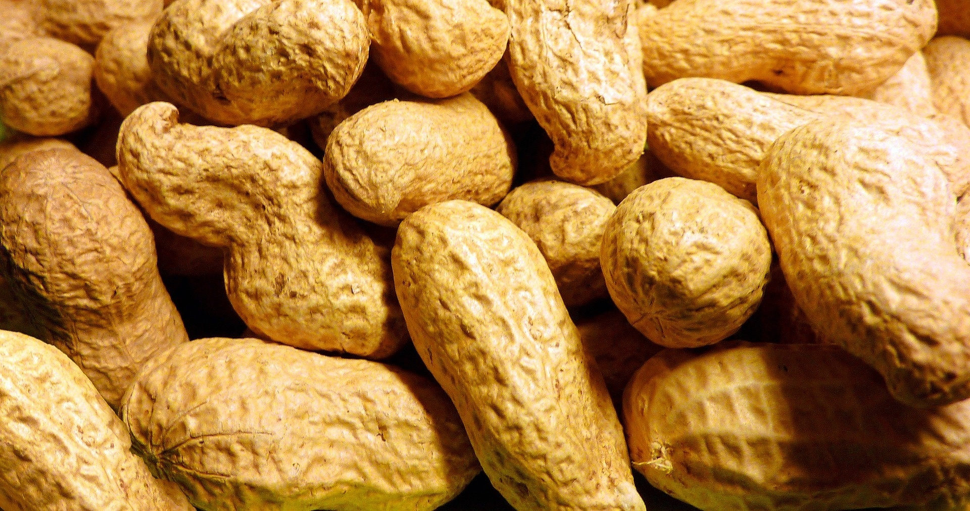 Study: New peanut allergy treatment could save kids  lives