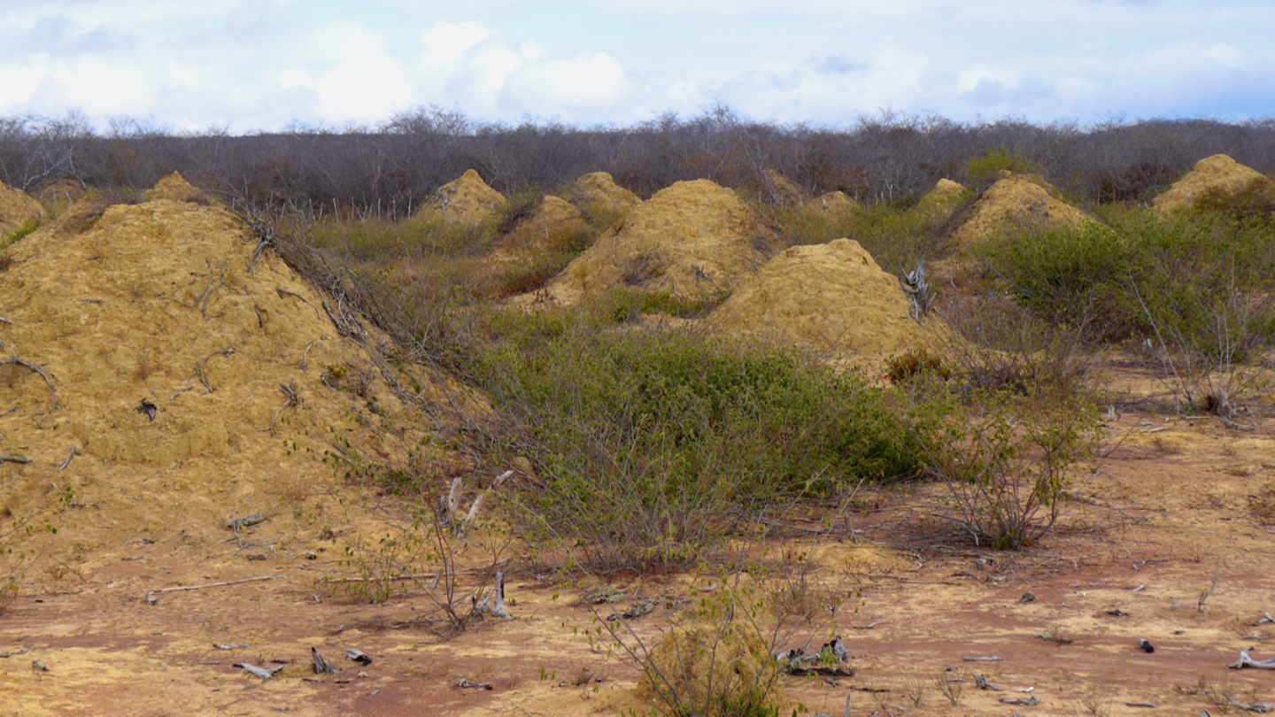 4,000-year-old termite mounds are so vast they re visible from space