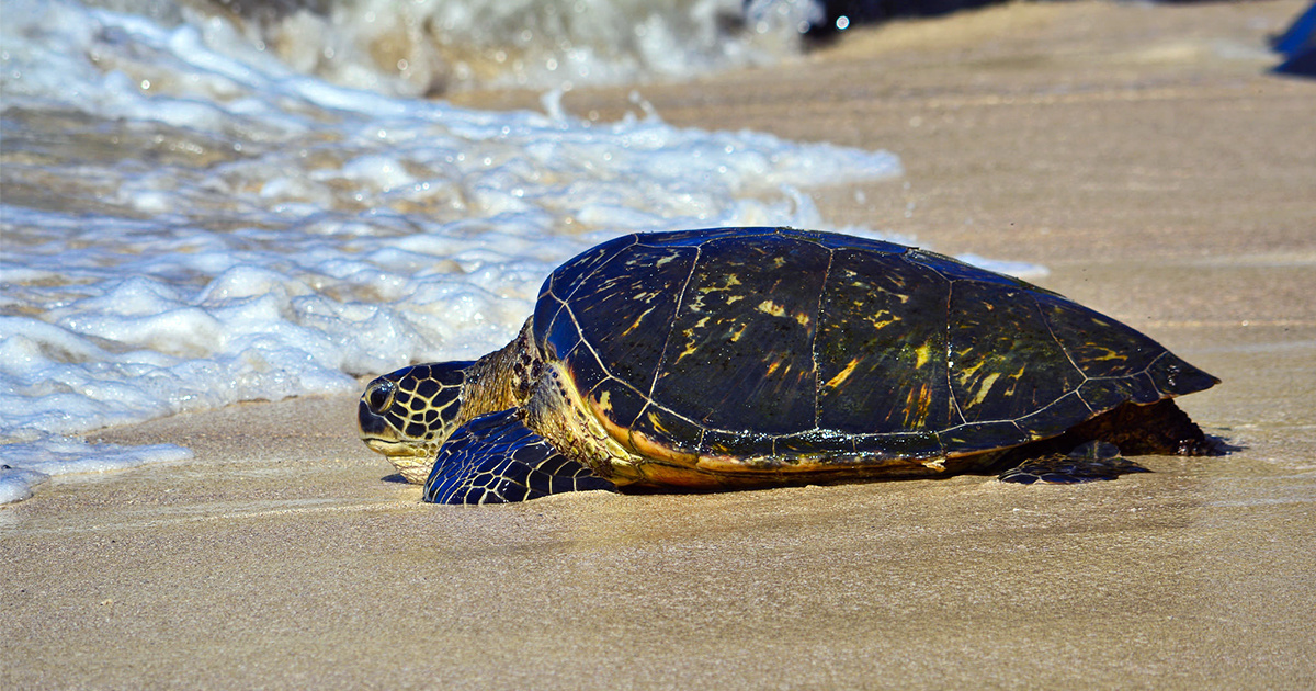 photo of 100% of Sea Turtles in Global Study Found With Plastics in Their Bellies image